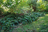 Upper stretch of Hellebore Alley.
