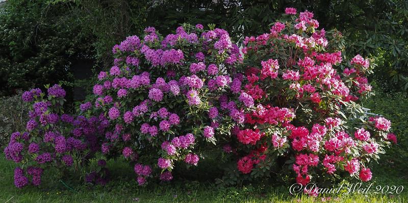 Rhodos I planted at 3534