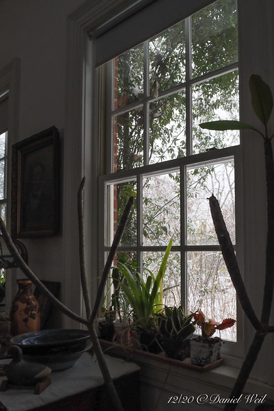 Guest room south window, Lady Banks rose getting snowed