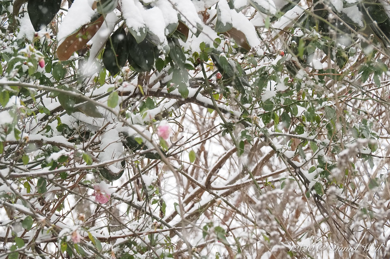 """The proverbial """"when blooms the rose/In frost and snows/Then will my love/Be true to me."""""""