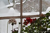 And then it hits.  Dan's study window, afternoonish 12/16/20