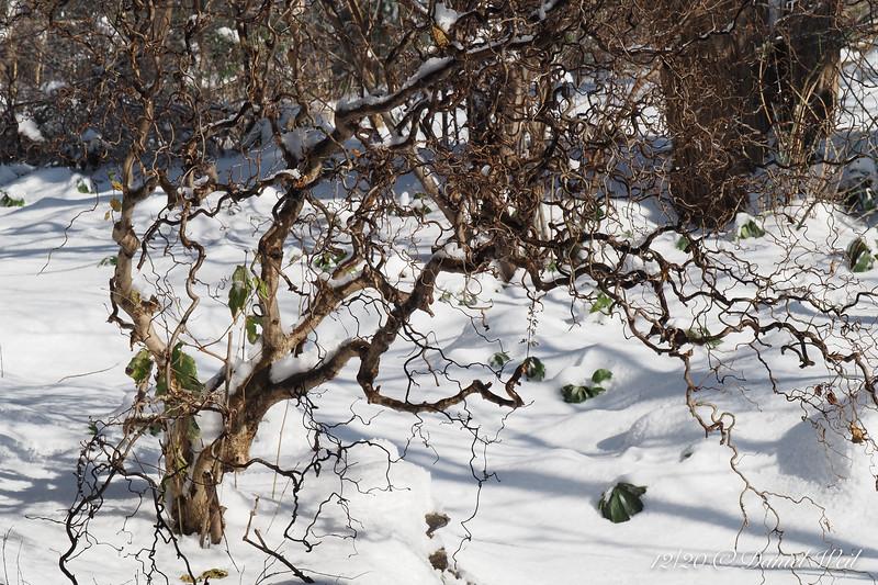 Drip, drip, drip, the snow melts....