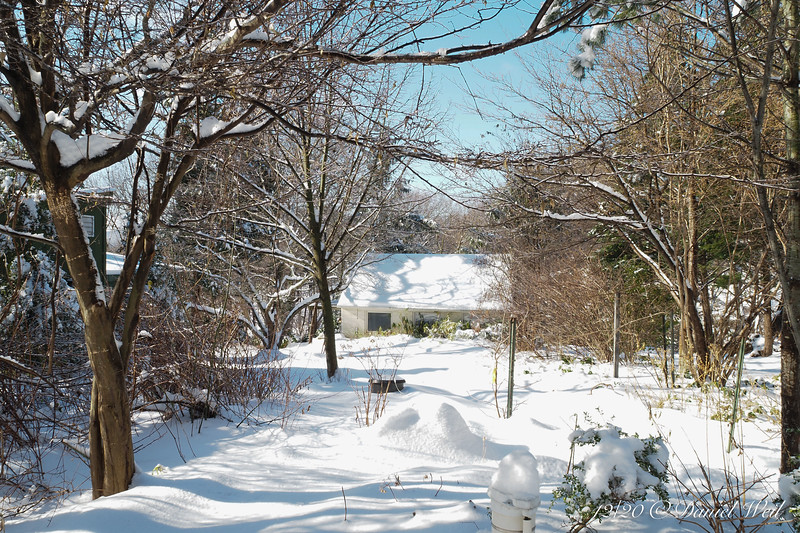 Dan's studio from E across Shade Room.  Big mound of snow is a potted hydrangea.