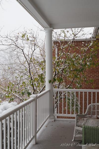 Midway through snow- our original chimonanthus, easily 18' high.