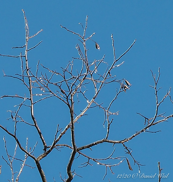 Ice on apple tree, closeup
