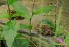 Sociability among amphibians