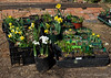 Some of Jim McKenney's bulbs, pre-giveaway on Sun 3/28