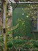 Corylopsis, daffodils, hellebores, peachplumcot, magnolia.  Life is good.