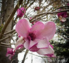 Magnolia, Courtyard