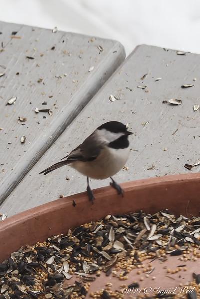 Bird!  Bird!