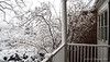 Front porch.  Snow on our original Chimonanthus.