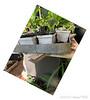 Soaking-tray for fresh cuttings