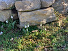 Snowdrops by N pond