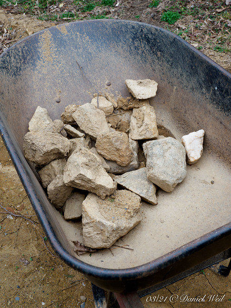 And before we till the churned up earth and compost and seed for lawn, we have to pick up beaucoup rocks.... Too small to really use, too big to chuck at groundhogs.