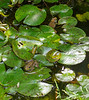 Quite a collection of frogs we have this year.