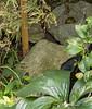Amphibian standoff...
