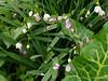 Snowflakes, Italian arum, and peachplumcot petals...