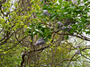 Lilac, NE of guest room.  Larger branches are Vitex @ hellebore stairs.