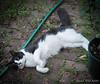 "Our ""neighborhood cat"",  Snoopy"