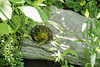 Frog, S pond.  Cranberry on L.