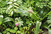 Geranium macrorrhizum, N alley
