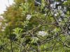 Apple tree N of small arbor