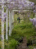 View through small arbor at me starting new path & planting magnolia