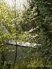 Seedling dogwood & holly NE corner of studio shed
