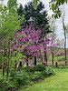 Redbud end of N alley