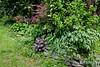 N door alley, tree peony, hydrangea, heuchera, J. maple, yada yada