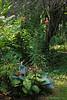 Hosta, tiger lilies, N end small arbor