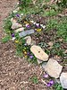 Path to W of Dan's studio; mixed crocus 3/2020
