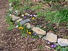 Path to W of Dan's studio, mixed crocus, 3/2020