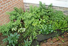Polygonatums, disporums, Asarum eur, holly fern, false lily of valley, weeds