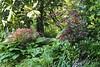 Japanese maples, magnolia, hosta, mayapples, N alley