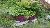 Paeonia obovata ex A.F. and annual dianthus