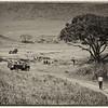 African safari. 1986.