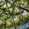 Circle of Fronds, Bora Bora