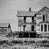 The Swine Family Homestead,.  Kansas.  1988