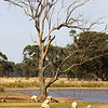 Around Our Country - Boree Creek and surrounds.