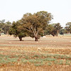 Around Our Country - Culcairn and Surrounds.