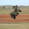 Around Our Country - Nangus and Surrounds.