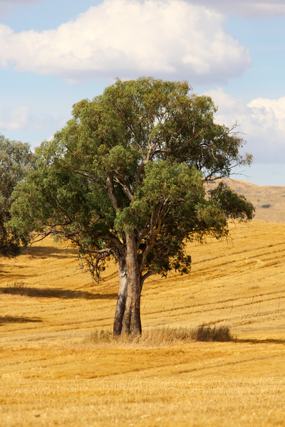 Around Our Country - Bungowannah and Surrounds.