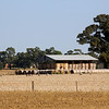 Around Our Country - Gerogery and Surrounds.