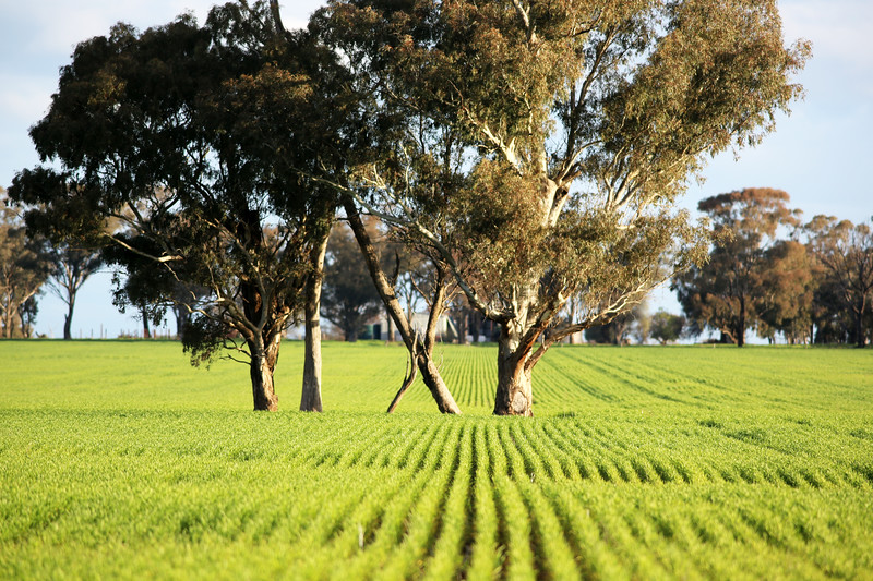 Around Our Country - Junee Reefs and Surrounds.