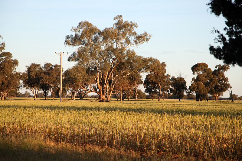 Urana and surrounds.