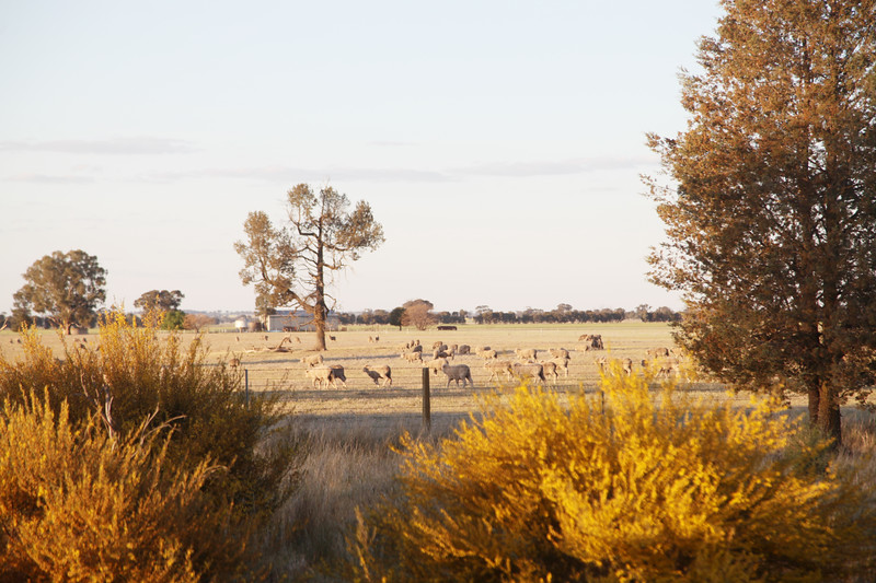 Around Our Country -  The Rock and Surrounds.