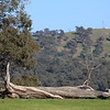 Around Our Country -  Tumut and Surrounds.