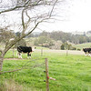 Around Our Country - Korumburra and Surrounds.