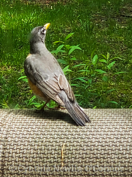 Mr. Robin Keeping Guard
